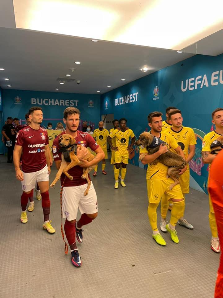Румынские футболисты вышли наполе вместе сбездомными собаками, чтобы найти имновый дом (ФОТО)