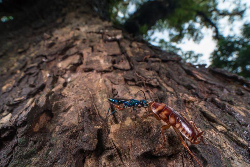 Фотография кормящихся муравьев выиграла конкурс Королевского биологического общества